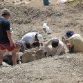 兵庫とモンゴルの恐竜化石を探る!